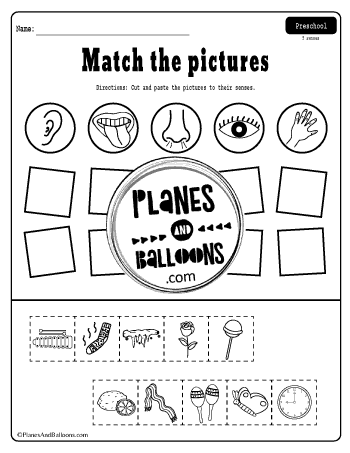 Five senses worksheets free printable